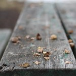 Picnic Table Close Up