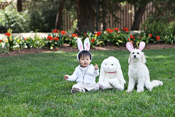 easter bunnies_600px