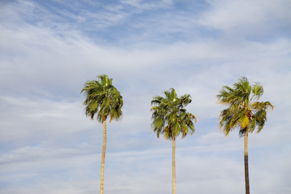 dfac6c4d4fd5 You know you ve entered a warm state when you see palm trees. I wish I  could bring these back with me to Missouri.