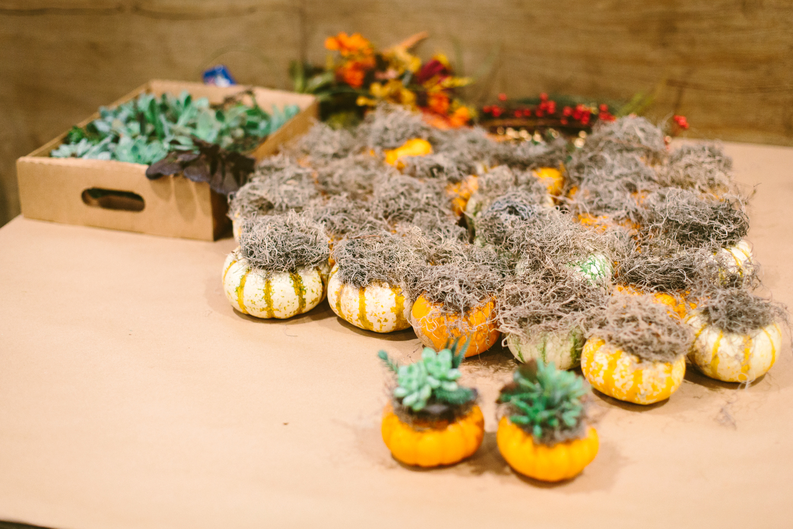 How to make pumpkin succulents