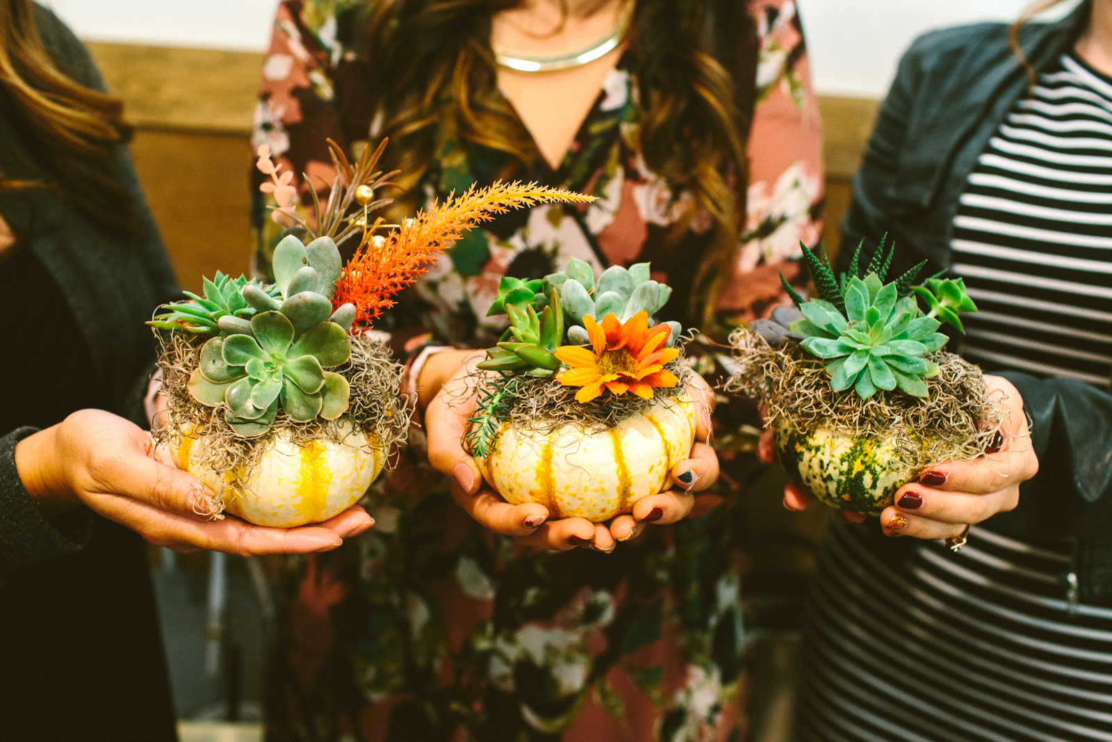 How to make pumpkin succulents