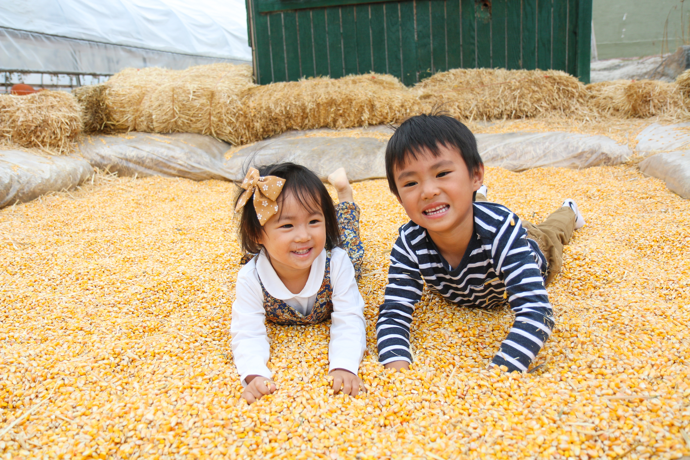 Toddler kids playing in corn