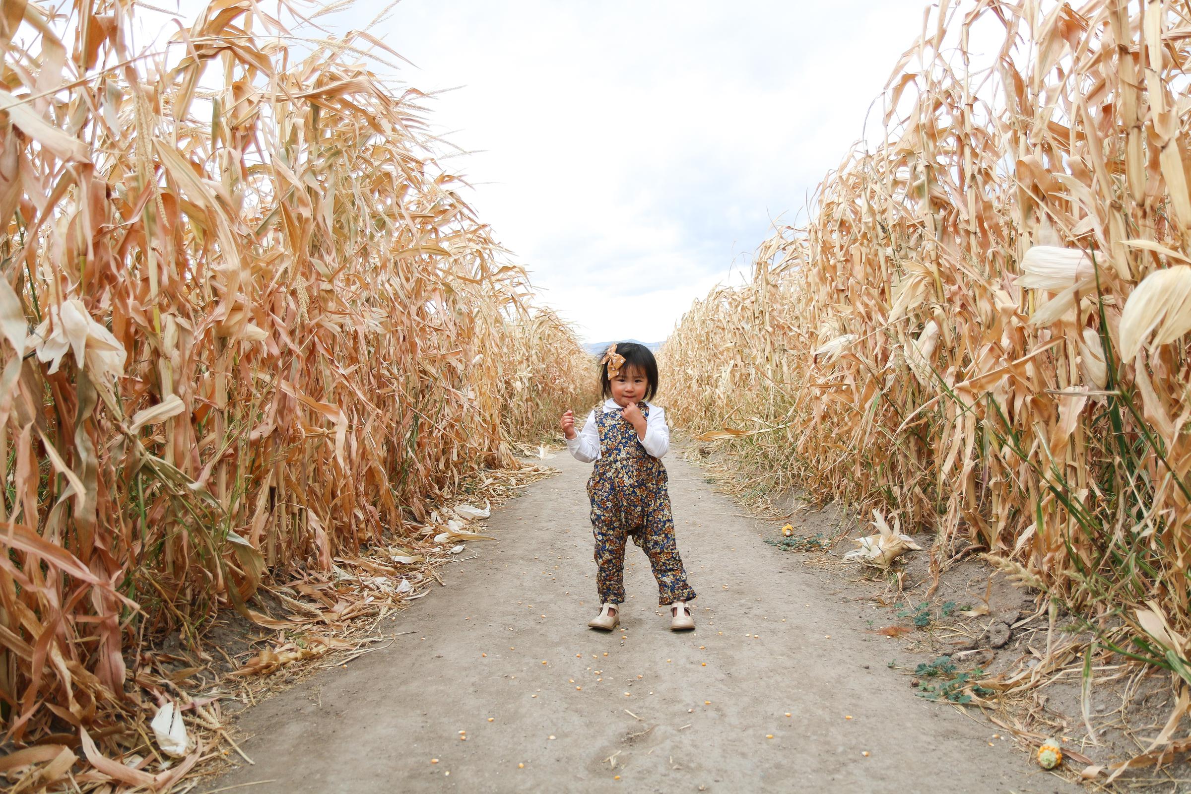 Toddler girl fashion in corn maze