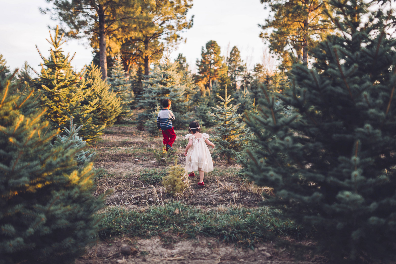 Kids playing in Christmas Tree Farm