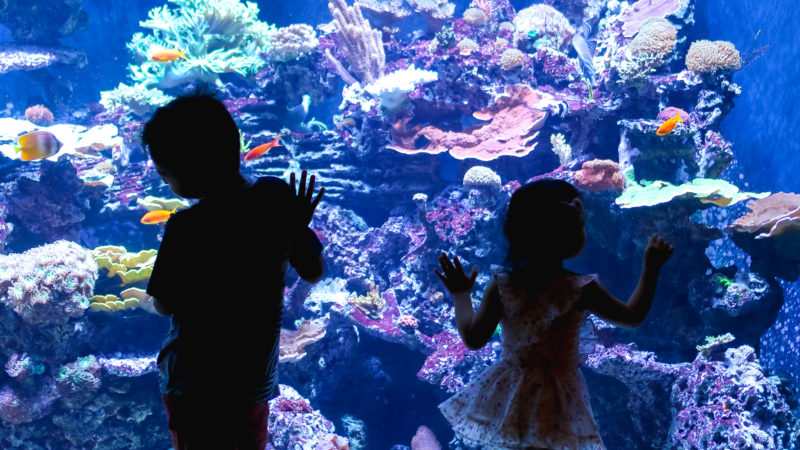 3 Tips to Visit the Loveland Living Planet Aquarium With Your Family