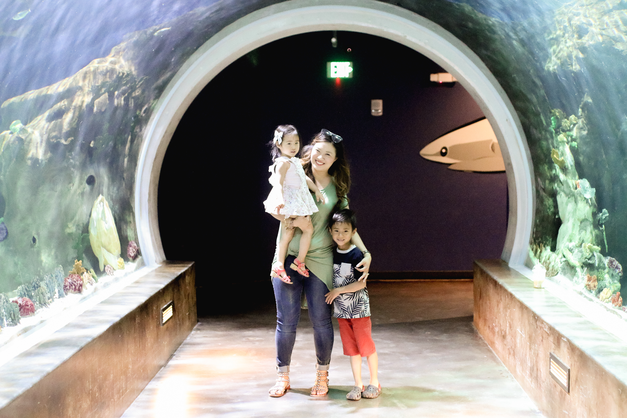 3 Tips to Visit the Loveland Living Planet Aquarium With Your Family by popular blogger Sandy A La Mode